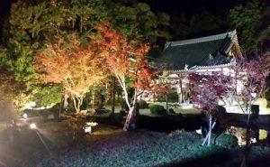普賢寺の観音堂のライトアップ in 京田辺市